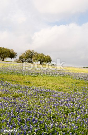 Spring wildflowers carpet the pasture in central Texas. Taken in Washington Count.