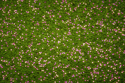 A meadow of purple vintage flowers with grass