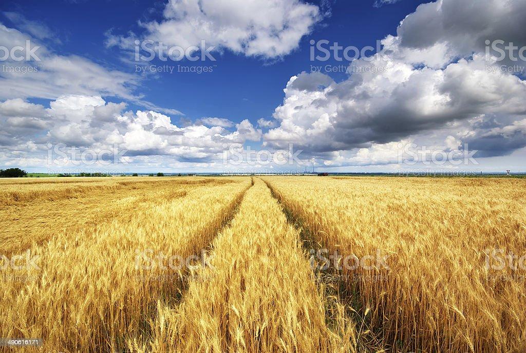Meadow von Weizen. – Foto