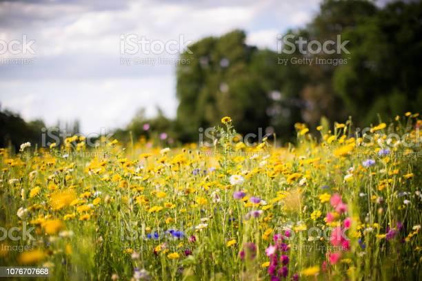 Meadow of wild flowers picture id1076707668?b=1&k=6&m=1076707668&s=612x612&h=7bk1hxaomuh9mkwefsll23n d0ahn6jvrmzsmwqyxhk=