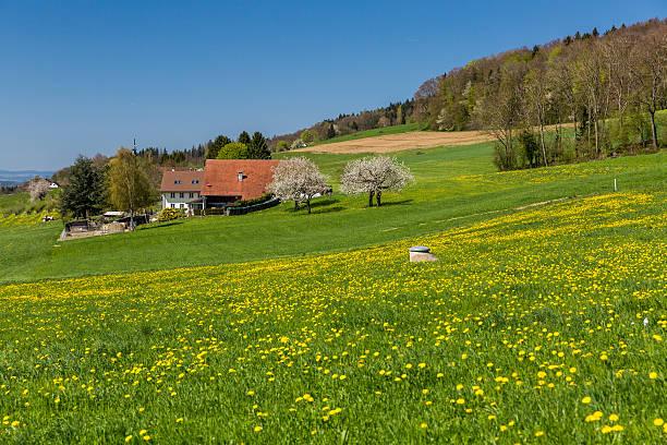 Wiese auf einem Berg in der Nähe von Zürich – Foto