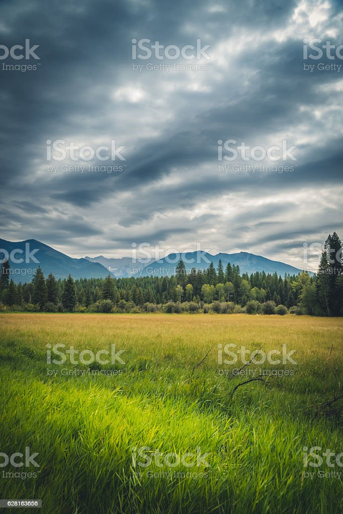 Meadow on an overcast day. - foto de stock
