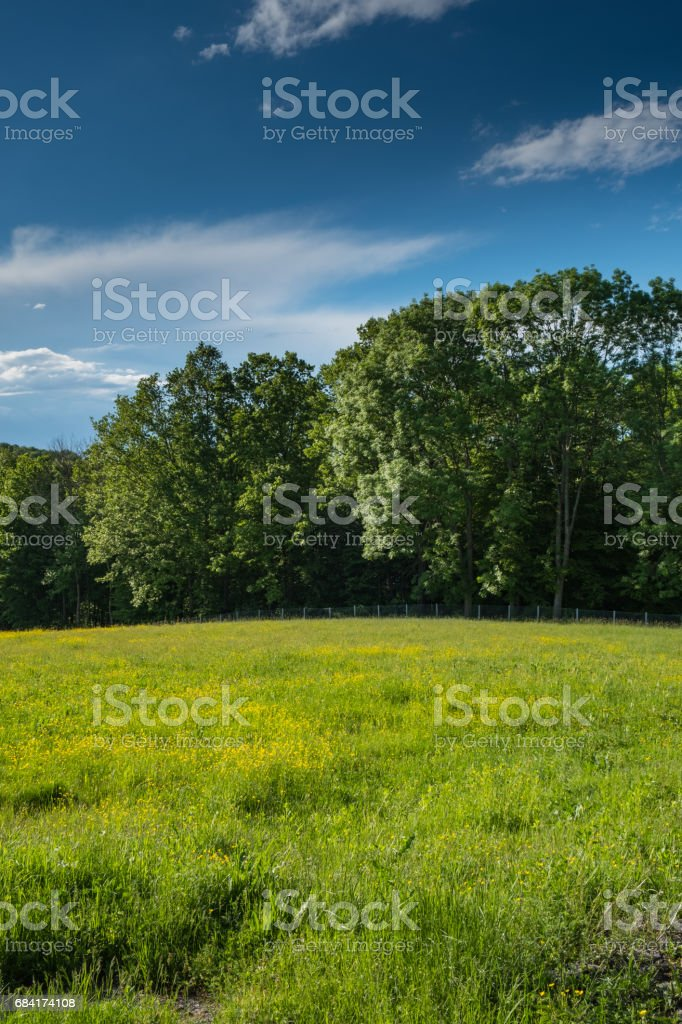 Meadow on the edge of the forest royalty-free stock photo