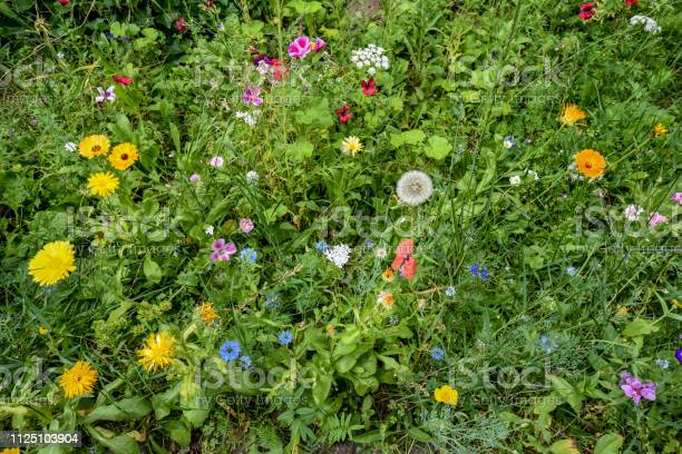 Meadow on the roadside with tall grass and many wildgrowing colorful picture id1125103904?b=1&k=6&m=1125103904&s=612x612&h=zua5vvhhumgud9dyqorri1hpcx6bv3pnw5oykojb2ec=