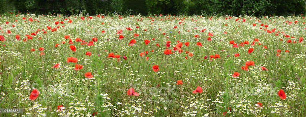 meadow panorama royalty-free stock photo