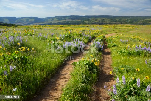 A trail cut through a meadow of wild flowers on Rowena Gap Plateau in the Columbia River Gorge, Oregon.
