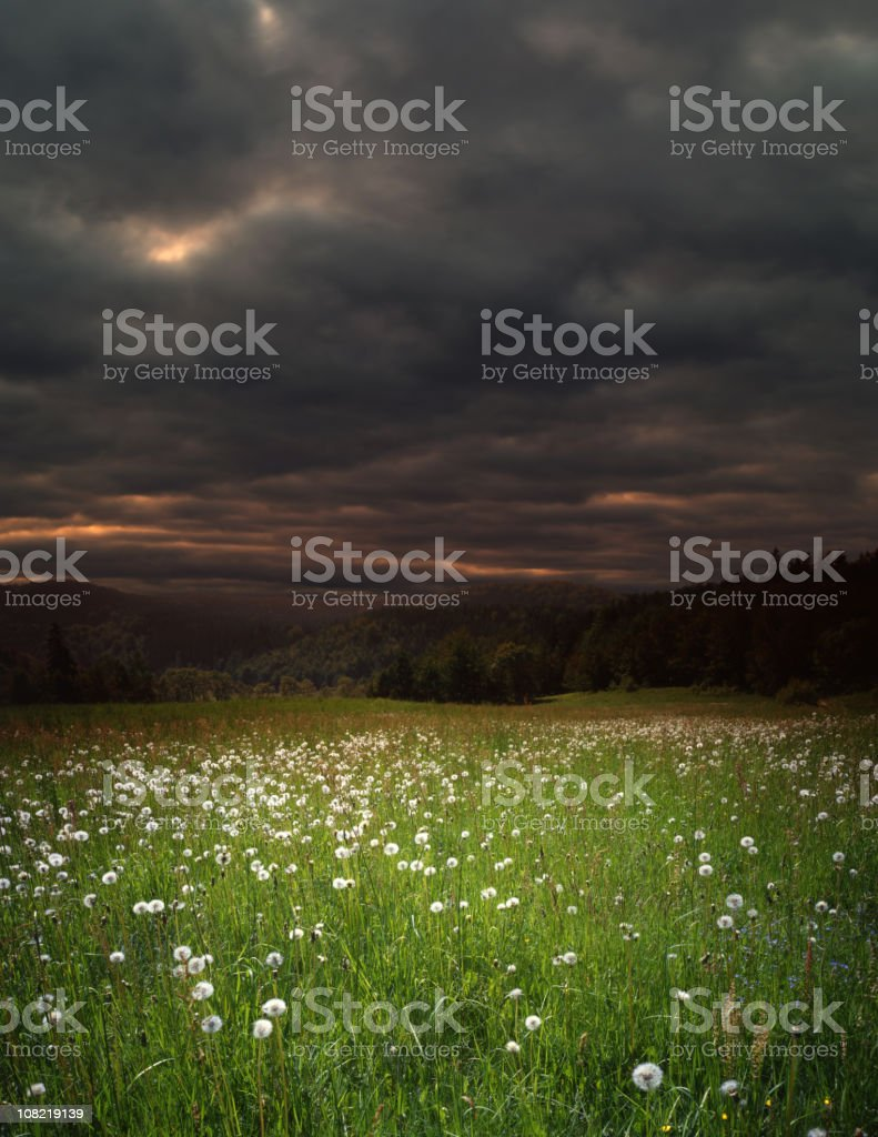 Meadow royalty-free stock photo