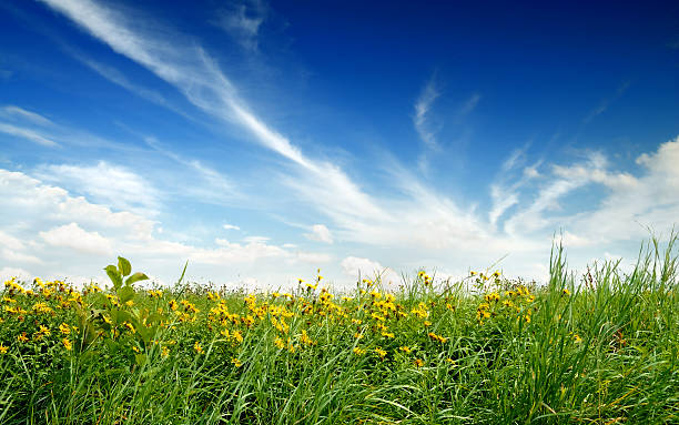 Meadow – Foto