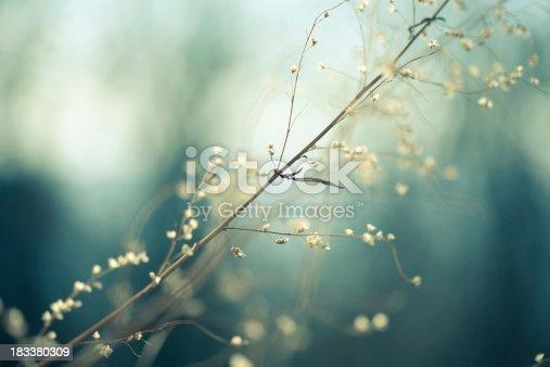 istock Meadow 183380309