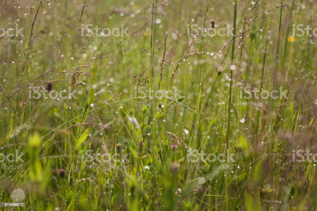 Wiese royalty-free stock photo