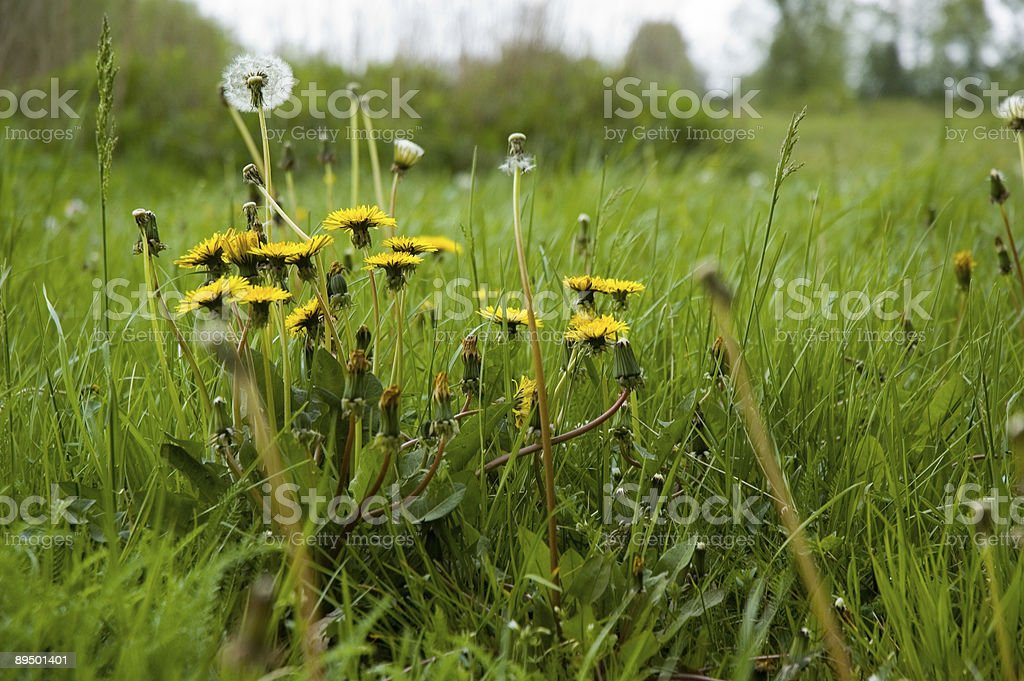 Meadow royaltyfri bildbanksbilder