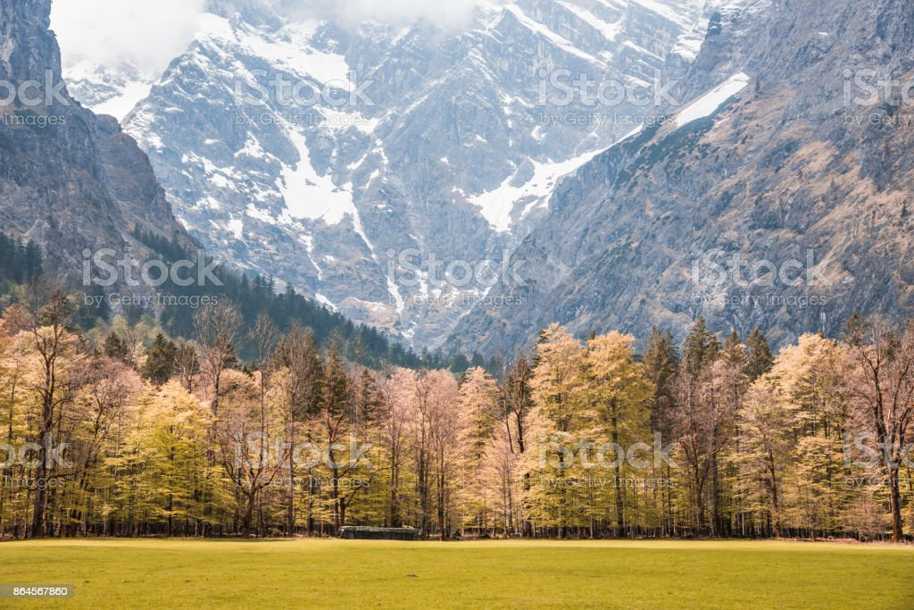 Meadow scene and mountain as a background. stock photo