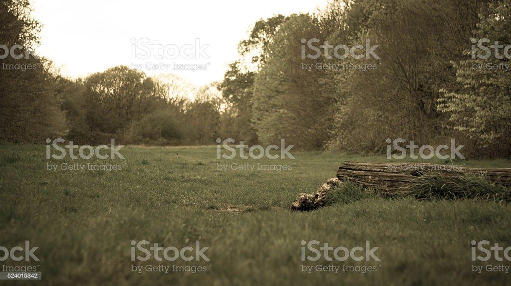 Meadow scene in twilight stock photo