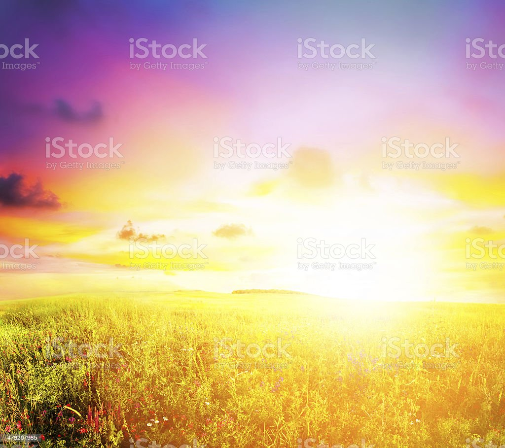 meadow sunset stock photo