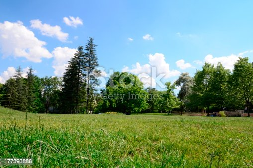 601026242istockphoto meadow surrounded by trees 177393886