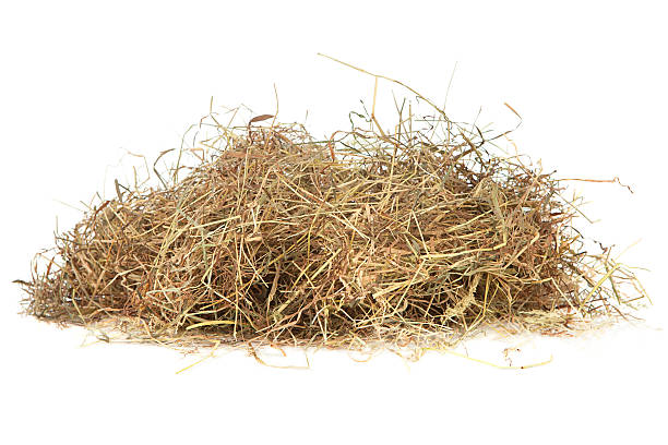 Meadow hay Meadow hay on white hay stock pictures, royalty-free photos & images