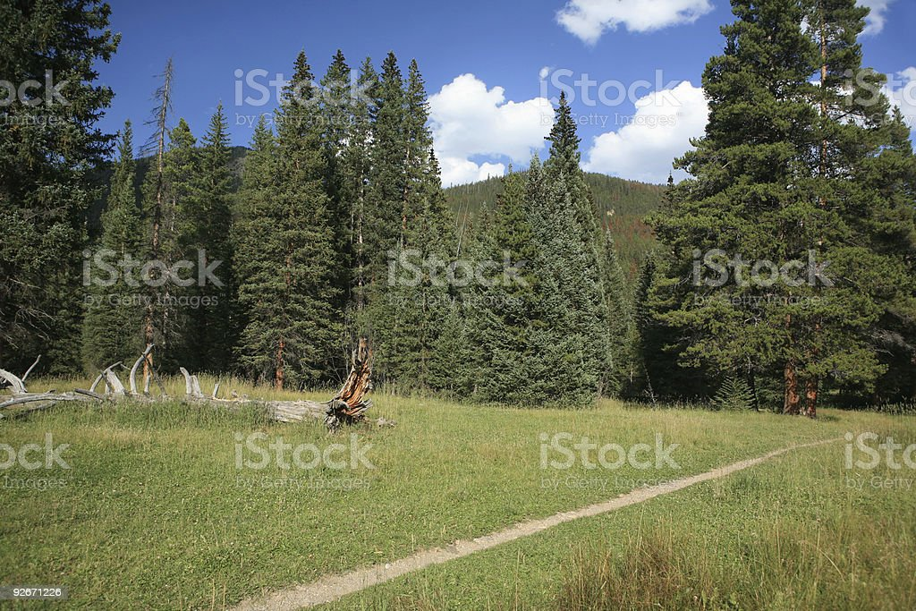 meadow trail royalty-free stock photo