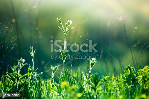Green grass and flowers at sunrise