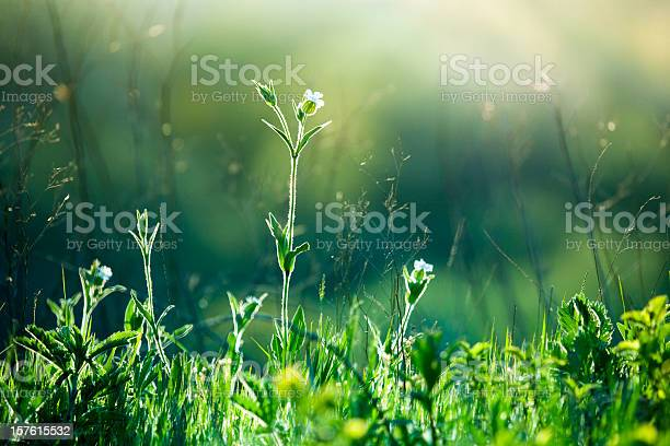 Photo of Meadow Wildflowers and grass at sunrise