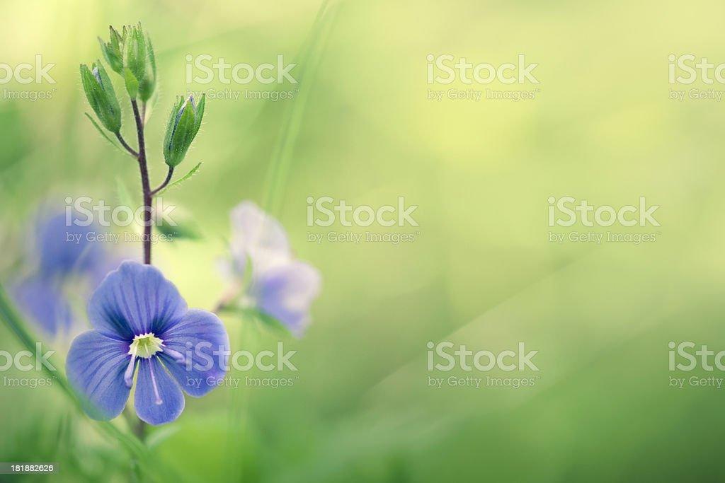 Meadow wildflowers royalty-free stock photo