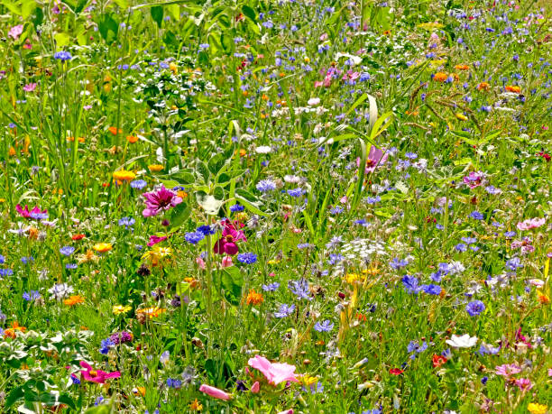 meadow with a lot of colorful flowers stock photo