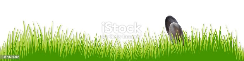 istock meadow with an Easter bunny 937973052