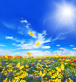 meadow with assorted flowers in green grass. spring landscape with butterflies and sunny blue sky