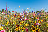 istock Meadow with blooming wildflowers in vibrant colors 1266926423
