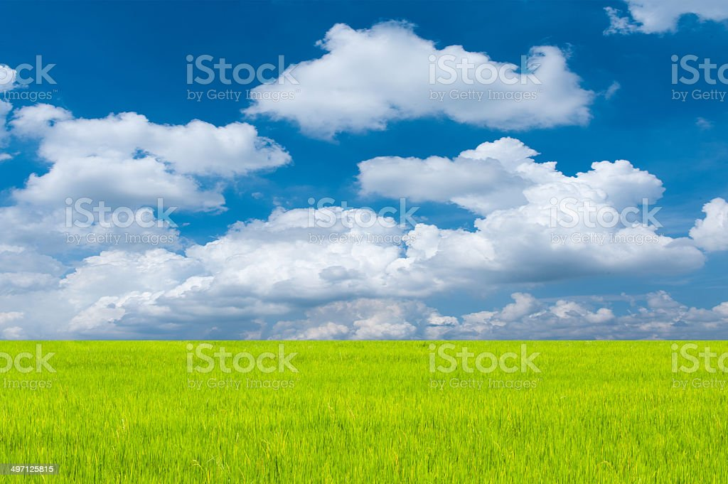 Meadow with blue sky and clouds. stock photo