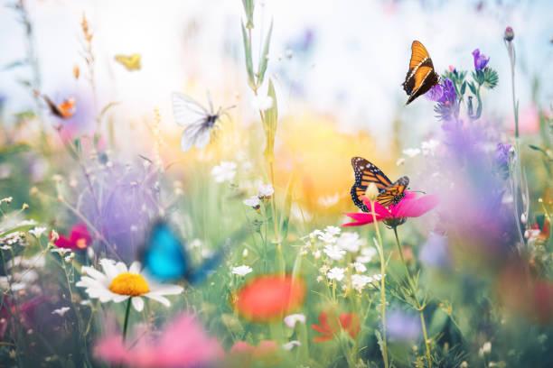 Meadow with butterflies picture id1205668041?b=1&k=6&m=1205668041&s=612x612&w=0&h=ugny w k4vyezaqhvhi8co1gvlj47ci8uv7 updpkn4=