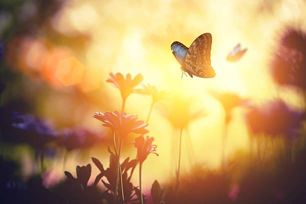 Meadow with butterflies picture id474468035?b=1&k=6&m=474468035&s=612x612&w=0&h=pzbjyfphmmdb qew0bwdmmyf e5zjac3mz5cogio20i=