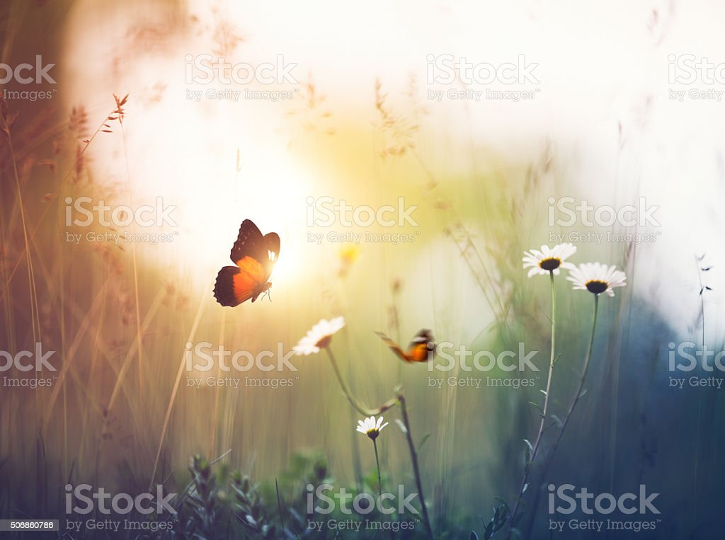 Meadow with Butterflies royalty-free stock photo