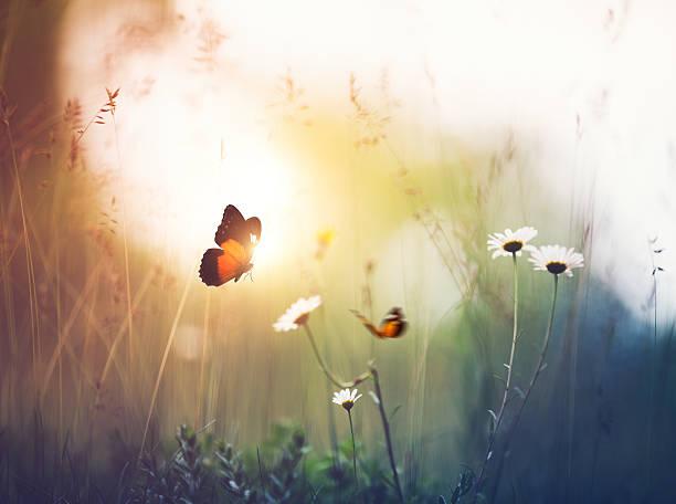 Meadow with butterflies picture id506860786?b=1&k=6&m=506860786&s=612x612&w=0&h=t7h2jcbadfy68ifponw zlvttsxryrxpzxosv2wlnak=