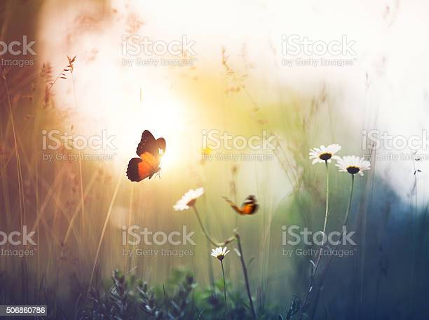 Photo of Meadow with Butterflies