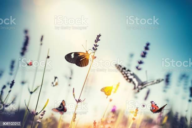 Meadow with butterflies picture id906102012?b=1&k=6&m=906102012&s=612x612&h=70oawkzjpju8bzxbf57hgabp0sail7mb edderace2q=
