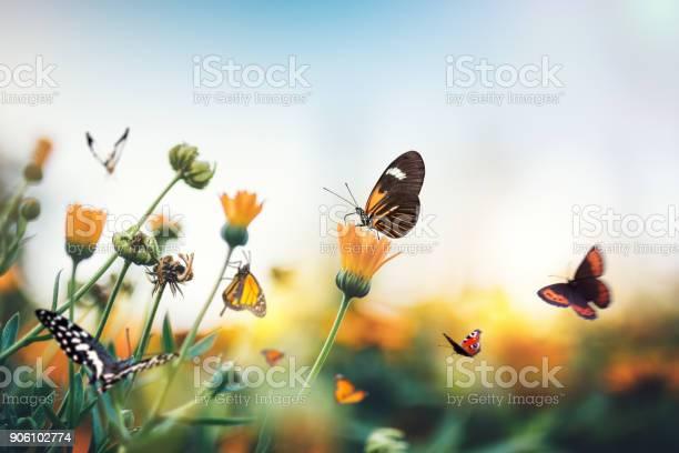 Meadow with butterflies picture id906102774?b=1&k=6&m=906102774&s=612x612&h=fnwwplzeoczgyawuadvu1dtilvl70ecops6zerc5yfm=