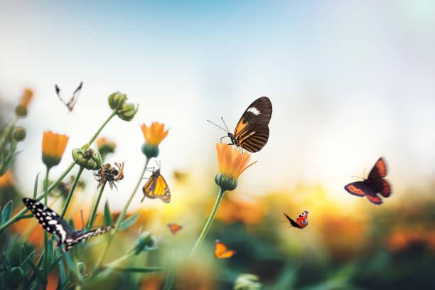 Meadow with butterflies picture id906102774?b=1&k=6&m=906102774&s=612x612&w=0&h=uswzulkz  j7e6p7aq0dmwtkb2 aufo wgwdp5zteoo=