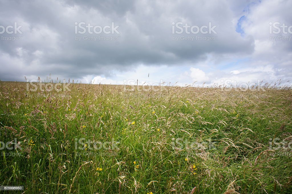 Meadow with cloudy sky stock photo