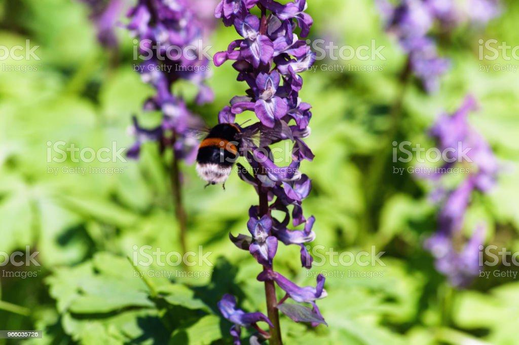Äng med nunneört blommor i olika färger - Royaltyfri Blomma Bildbanksbilder