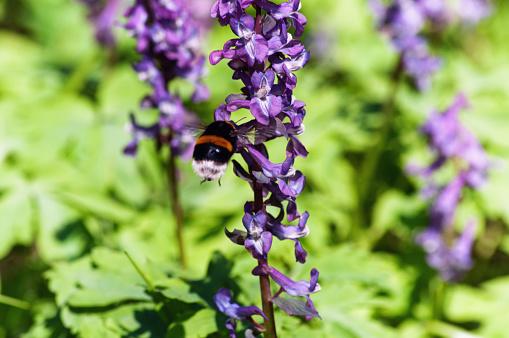 Äng Med Nunneört Blommor I Olika Färger-foton och fler bilder på Bi - Insekt