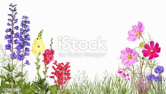 istock Meadow with delphinium, snapdragons, cosmos flowers, cornflower and others 1278912667