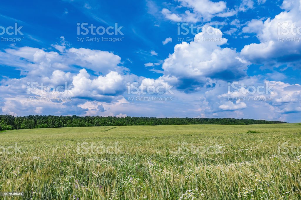 Meadow with flowers. stock photo