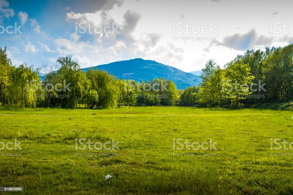 A meadow with forest background stock photo
