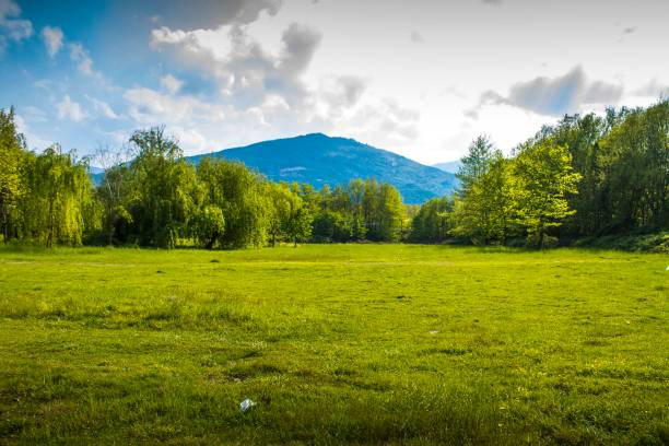 A meadow with forest background A meadow with forest background and sky glade stock pictures, royalty-free photos & images