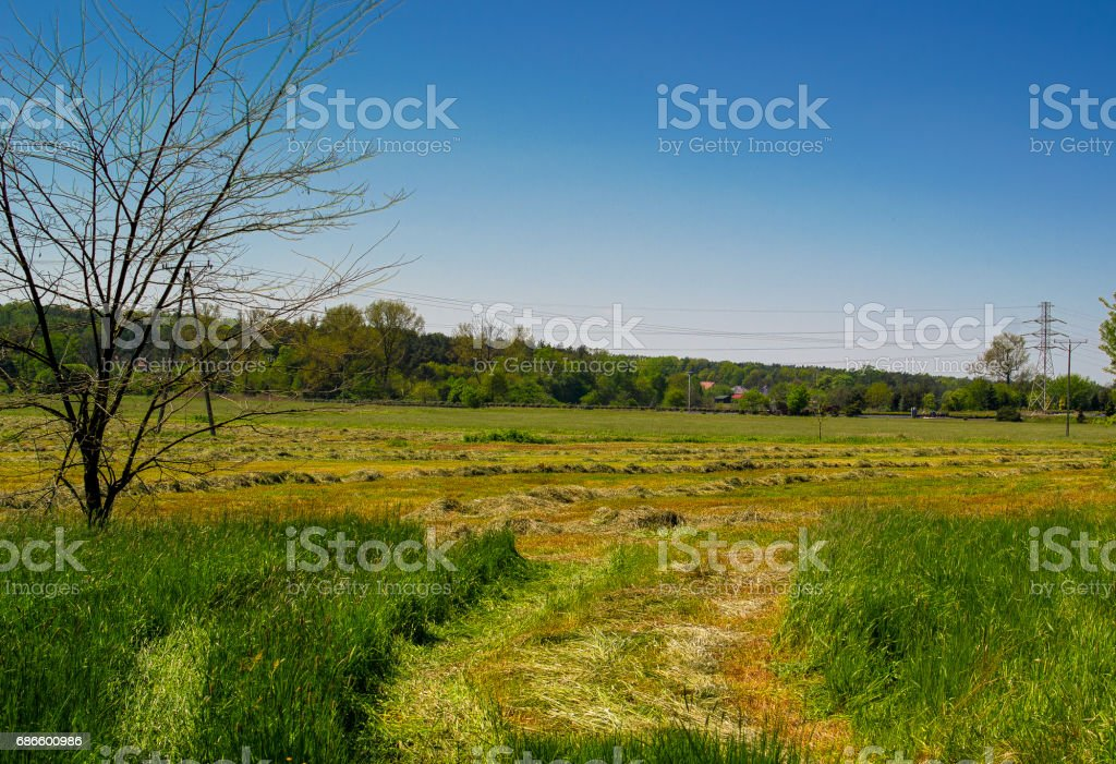長滿草的草草甸。 免版稅 stock photo