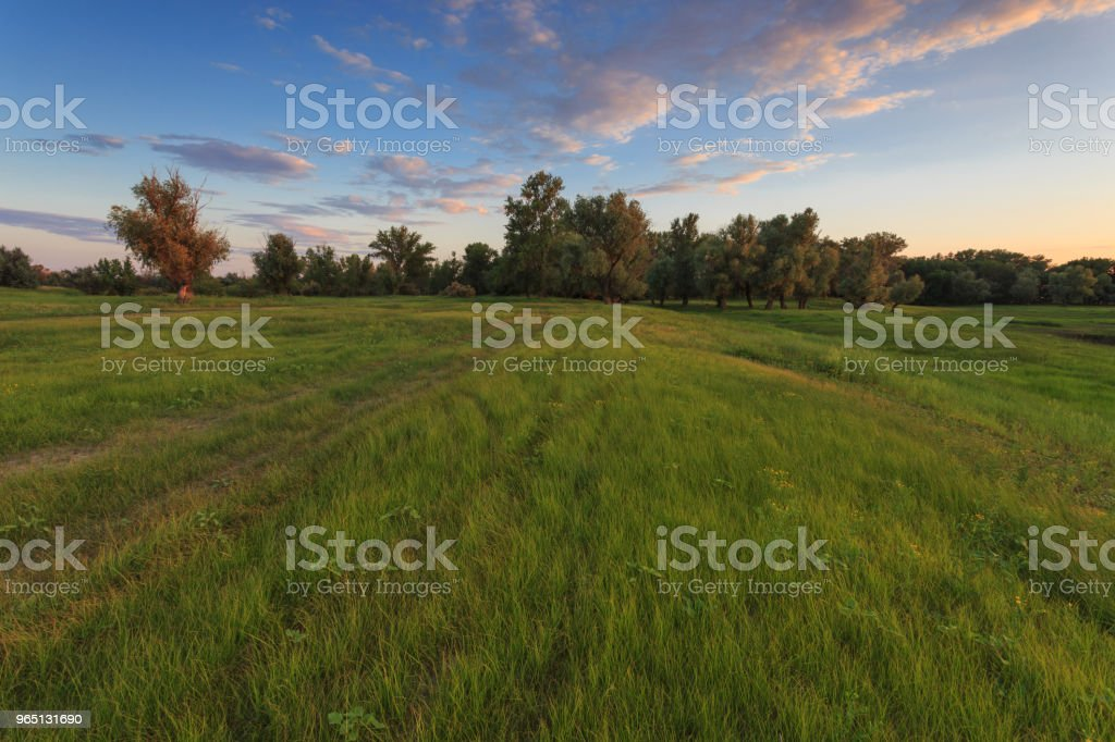 Meadow with green grass and trees against the beautiful cloud and blue sky at sunset royalty-free stock photo