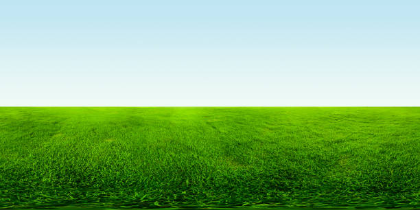 Meadow with green grass picture id969414614?b=1&k=6&m=969414614&s=612x612&w=0&h=dvwk9rv7ns 7lmhpimouace ei3occuytexnp7ffj8c=