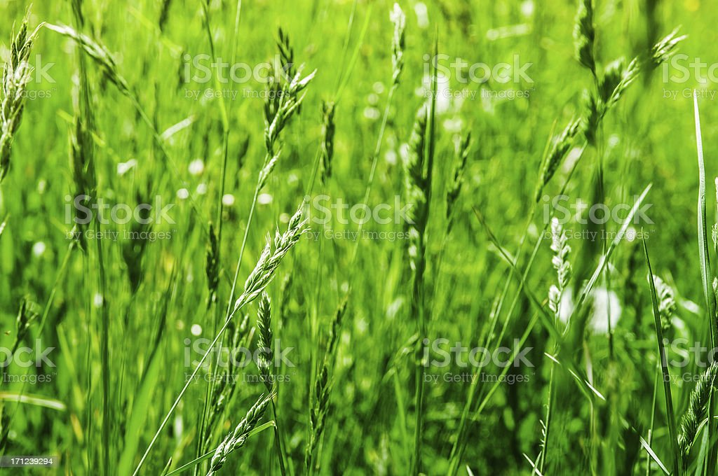 meadow with long grass stock photo