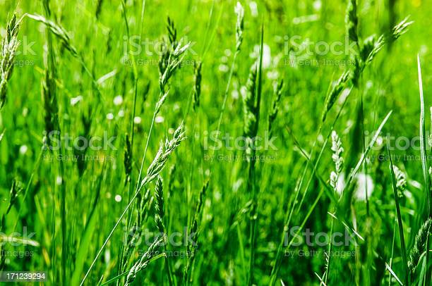 Photo of meadow with long grass