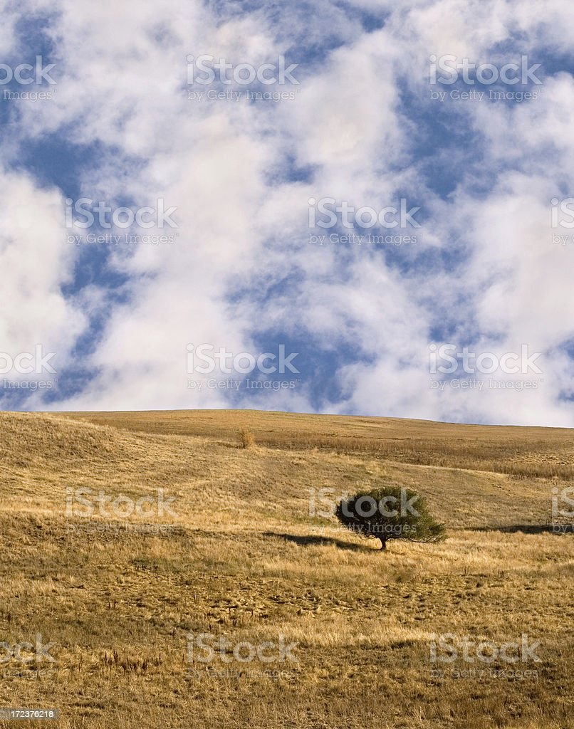 Meadow with Single Tree royalty-free stock photo
